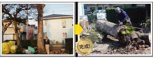 枯れ木の伐採-神奈川で造園、エクステリア工事なら鈴木造園にお任せ下さい。造園、植栽、神奈川・東京の庭施工、坪庭・垣根施工